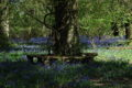 Bluebell wood resting seat